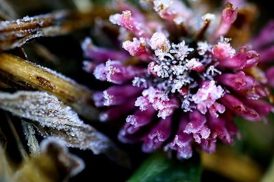 花の霜.jpg