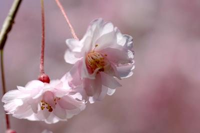 花の中から.JPG