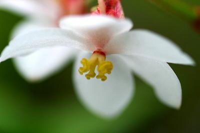 木立begonia.jpg