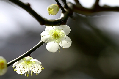 hakubai jyoumyouji-5.jpg