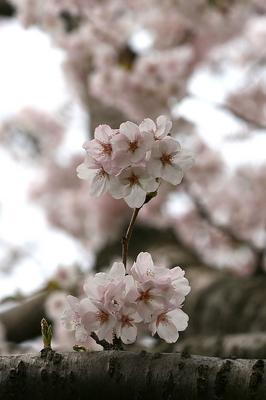 jyousikouen-tate-6.jpg