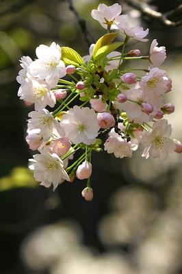 kaicyouji-s-tate-1.JPG