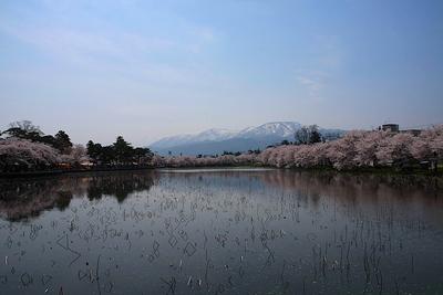 sakura-h-yoko-3.JPG