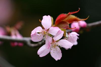 tokimori-sakura-yoko-4.jpg
